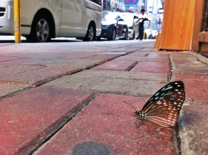 butterfly-in-hong-kong-1429841-m.jpg