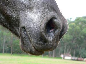 horsemouth.jpg